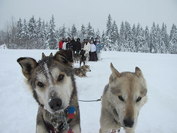 Iditarod 2 Dogs