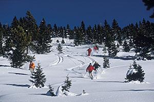 Vail Skiers in Fresh Powder