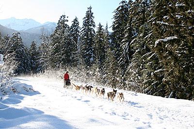 Revelstoke Recreation Winter Dog Sledding