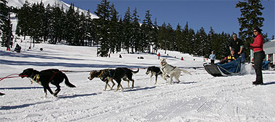 Mt. Bachelor Sled Dogs