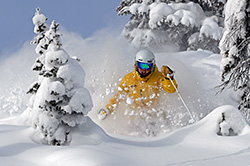 Steamboat Skier in Powder