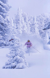 Deep Powder Tree Skiing